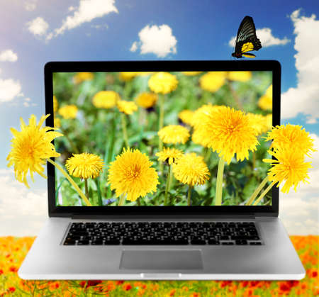 botany: Laptop with nature wallpaper on screen on poppies field against blue sky background