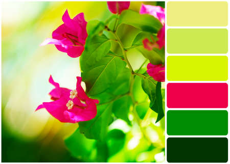 colours tints: Fresh flowers over green leaves and palette of colors