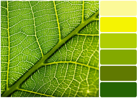 Green leaf and palette of colors Stock Photo
