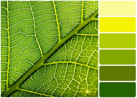 paleta: Hoja verde y paleta de colores Foto de archivo