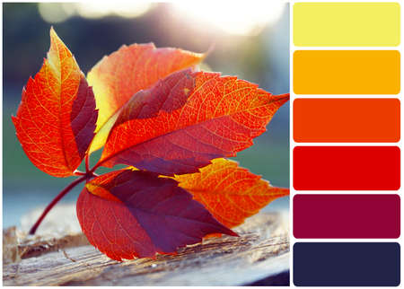 color color palette: Beautiful autumn leaf on stump and palette of colors Stock Photo