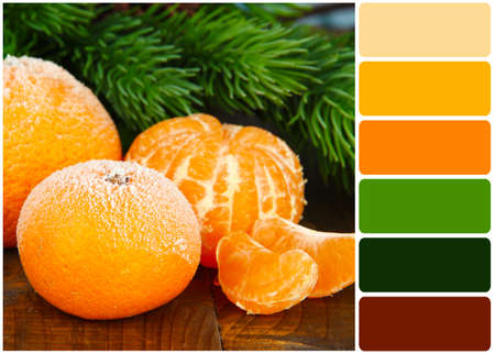 color color palette: Ripe frosted tangerines with fir branch on wooden background and palette of colors