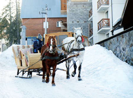 wintertime: Wagon with horses over snow in wintertime