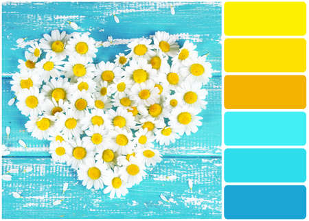 color palette: Chamomile in shape of heart on color wooden background and palette of colors