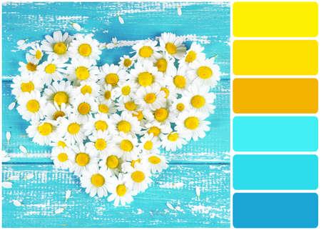 colour in: Manzanilla en forma de corazón en color de fondo de madera y paleta de colores Foto de archivo