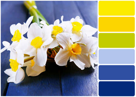 color palette: Beautiful bouquet of daffodils on wooden background and palette of colors