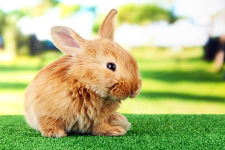 foxy: Fluffy foxy rabbit on grass in park