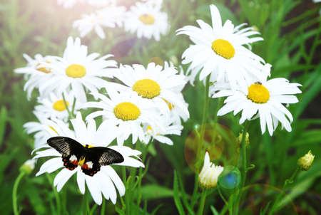 spring background: Beautiful butterfly flying on meadow Stock Photo