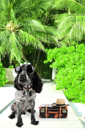 flyaway: Funny dog tourist with suitcase, sunglasses and hat, outdoors Stock Photo