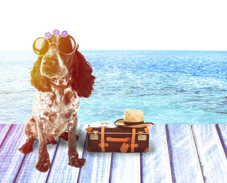 flyaway: Funny dog tourist with suitcase, sunglasses and hat near pool