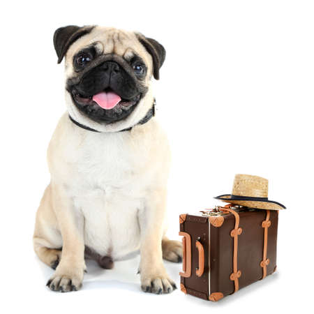 suitcase packing: Funny dog tourist with suitcase and hat, isolated on white