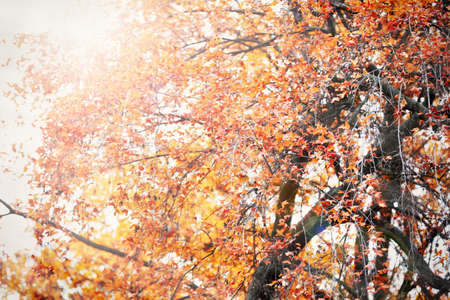 autumn trees: Beautiful autumn trees with sunlight