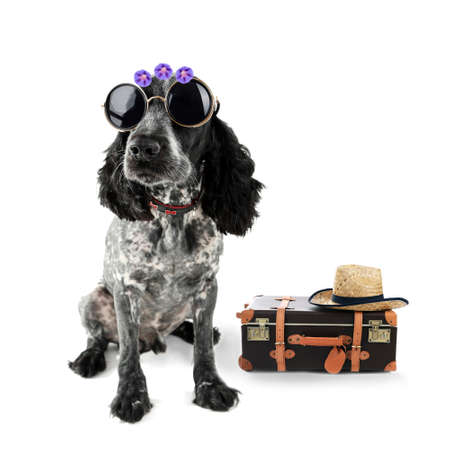 suitcase: Funny dog tourist with suitcase, sunglasses and hat, isolated on white Stock Photo