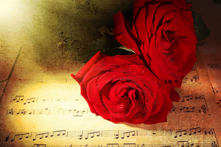 retro music: Beautiful red roses on music sheets, closeup Stock Photo