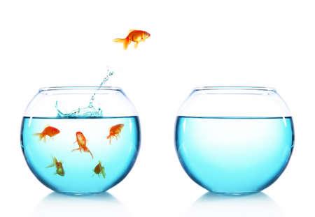peces de colores: Goldfish que salta del acuario de cristal, aislados en blanco