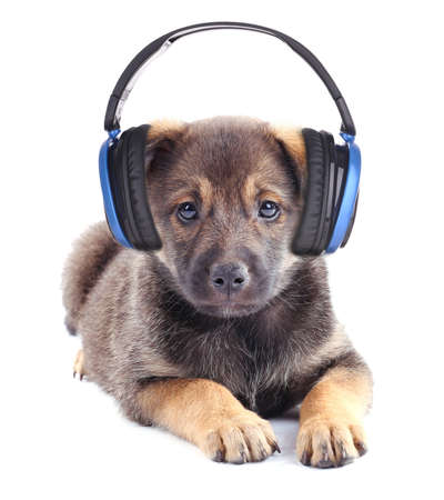scamper: Cute puppy with headphones isolated on white