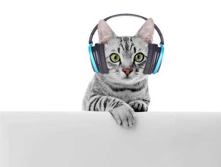 Krásná kočka se sluchátky na uších izolovaných na bílém