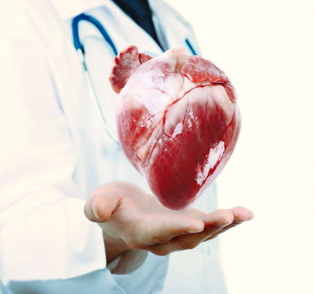 heart organ: Medical concept. Male doctor with real heart in hands.