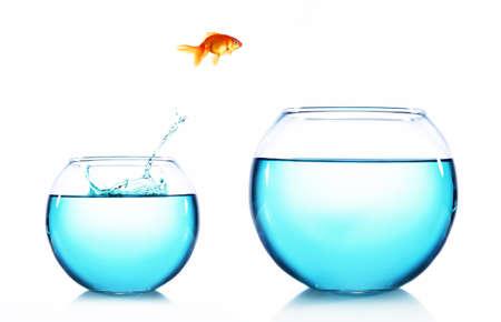 goldenfish: Goldfish jumping from glass aquarium, isolated on white