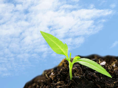 to thrive: Green seedling growing from soil on blue sky background Stock Photo