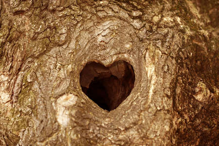 bark background: Tree hollow in heart shape close-up Stock Photo