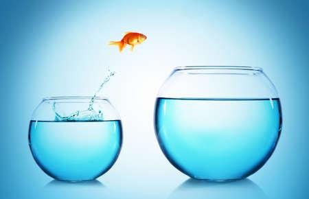 Goudvis springen uit glazen aquarium, op een blauwe achtergrond Stockfoto
