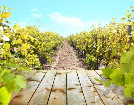 viñedo: Mesa de madera con el viñedo