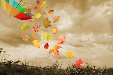 cloudy day: Umbrella and autumn leaves flying in rainy sky