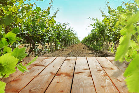 wine growing: Wooden table with vineyard Stock Photo