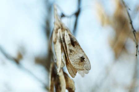dried leaf: Dried leaf, closeup Stock Photo