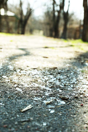 shards: Shards of glass on road with trees, outdoors