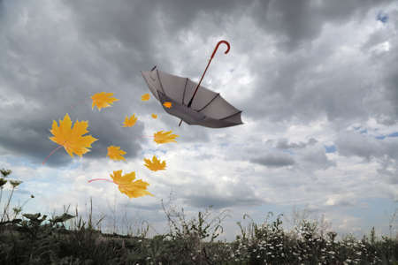 Umbrella and autumn leaves flying in rainy sky