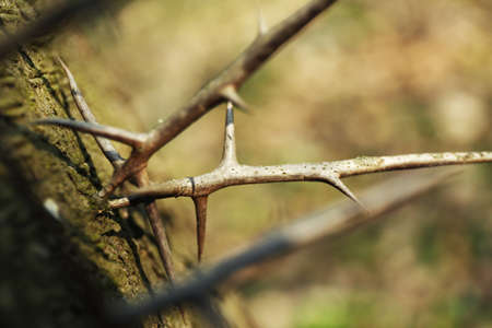 crook: Dried branches in park Stock Photo