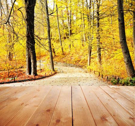 luz natural: Bosque de oto�o hermoso. La naturaleza de fondo Foto de archivo
