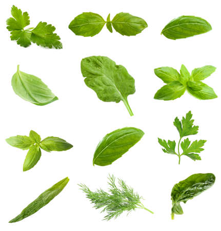 health collage: Collage with fresh green leaves of aromatic herbs, isolated on white Stock Photo