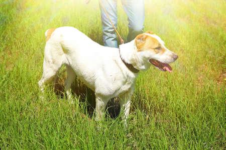 alabai: Funny big alabai dog and owner, outdoors Stock Photo