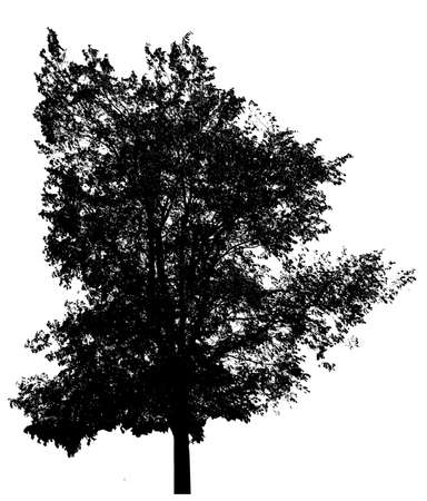 tree shape': Black tree silhouette, isolated on white Stock Photo