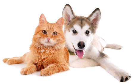 Cute dog and cat isolated on white Stockfoto