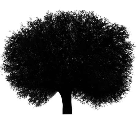 tree isolated: Black tree silhouette, isolated on white Stock Photo