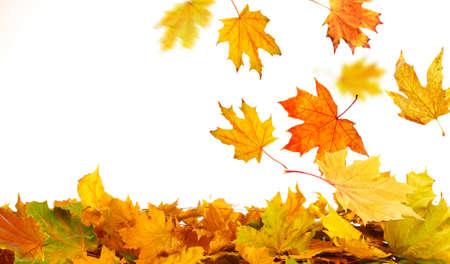 hojas secas: Pila de hojas de otoño, aislados en blanco
