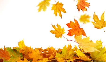 golden border: Pile of  autumn  leaves, isolated on white