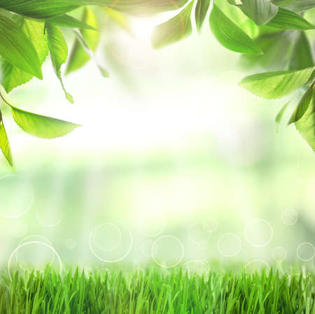 sunlight: Spring or summer season abstract nature background with green grass and leaves Stock Photo