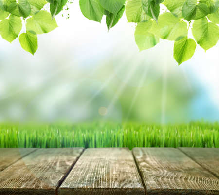Spring or summer season abstract nature background with green leaves, grass and wooden floor Stock Photo