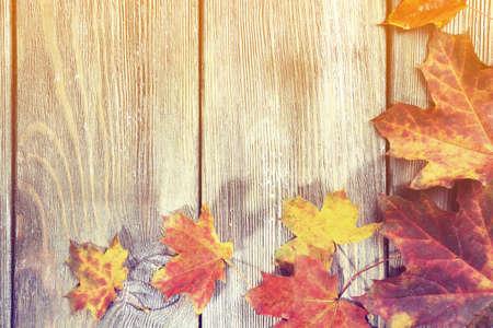 단풍 나무 배경에 나뭇잎 스톡 콘텐츠