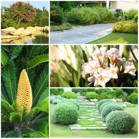 suburbia: Collage of beautiful nature landscaping Stock Photo
