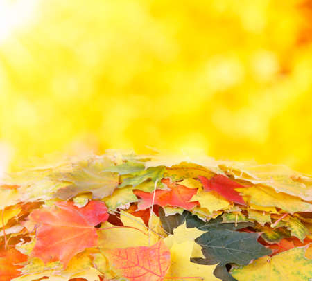 pile of leaves: Pile of  maple leaves  on nature autumn background Stock Photo