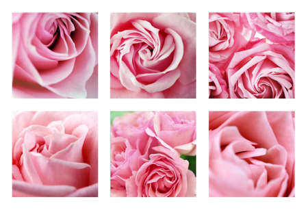 flowers background: Collage with beautiful pink roses