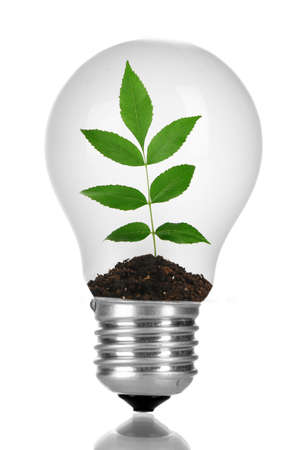 growing inside: Green eco energy concept. Plant growing inside light bulb, isolated on white