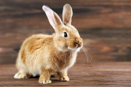 Pequeño conejo sobre fondo de madera Foto de archivo
