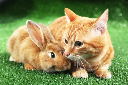 rabbit: Red cat and rabbit on green grass background